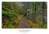 Trail Of Many Mosses.jpg
