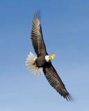 Homer Eagle 1.jpg