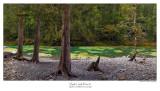 Opal Creek Pano 1.jpg