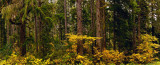 Yellow Forest Floor Pano.jpg