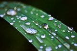 Leaf and Droplets ADJ.jpg