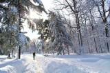 Save The Snow ADJ.jpg