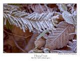 Heavy Frost.jpg