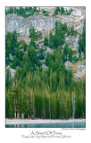 A Stand Of Pines.jpg   (Up To 30 x 45)