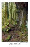 The Emerald Trail.jpg