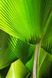 Palm tree reflections Hawaii