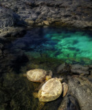 Turtles resting at Kiholo Bay