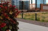 BNSF 9986 Denver CO 28 Sept 2008