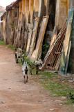 City Goats, Kochi