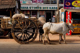 Ox Cart, Kochi