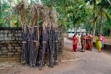 Saris & Sugarcane