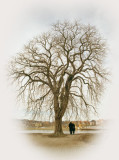 A tree - you and me.