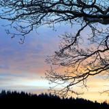 January Afternoon, Remmen, Halden #4