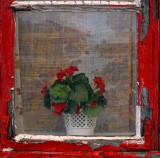 Window Damhaugen