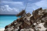 Cancun Iguane
