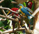 Macaws01.jpg