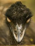 Emu 01.jpg