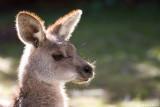 Koala Park, Sydney