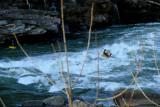Jackson Kayaks, Rock Island, Tennessee