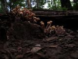 Fungi, Fun-Guy, Fungus, Fun-Gus, Mushrooms, Shrooms