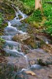 Spring Dawn In Hackfall Woods  09_DSC_0880