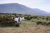 Ponies under Hay Bluff  10_DSC_1647