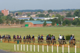 Bury Side Gallops, Newmarket  10_DSC_3237