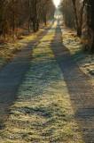 Frosty Track  DSC_4626