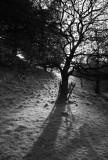 Monochrome Tree  DSC_6974