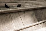 Pigeons on Duomo of Milan