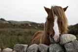 Connemara - Ireland