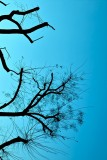 Trees in Giardini Indro Montanelli