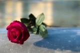 Rose on Foutain of Giardini Indro Montanelli