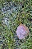 Frozen Grass in Milan
