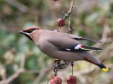 Vogels - Birds