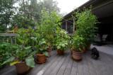 _MG_1375 Foggy Mountain Garden