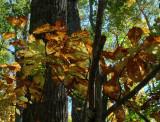 P1000607 Glorious Autumn Color