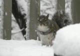 P1020278 Squirrel in Snow