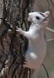 _MG_8022 White Squirrel