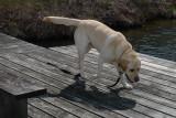 RP1030948 Polo on Dock