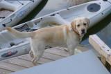 RP1030975 Polo on Dock