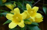 P1040170 Asheville Botanic Garden