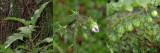Thorny Pest