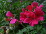 P1050822 Nostalgic color