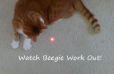 Watch Beegie Work Out