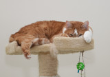 P1080710 Stealth Cat
