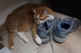 DSCF7344 Not such a big kitty