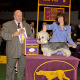 Disher Takes Best of Breed At Westminster 2-15-11