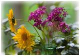 _MG_0248 Cut Flowers