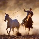Hooves & Dust 30